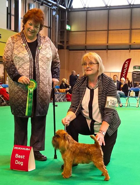 crufts best dog 2